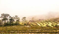 Nebelstimmung in den Reisterassen