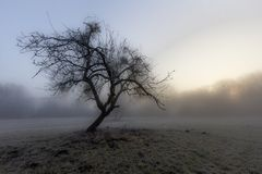 Nebelstimmung morgens