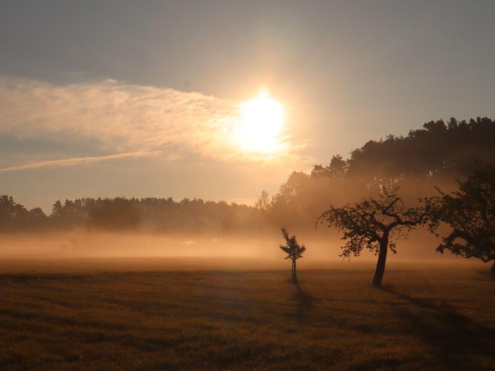 Nebelstimmung über der Wiese