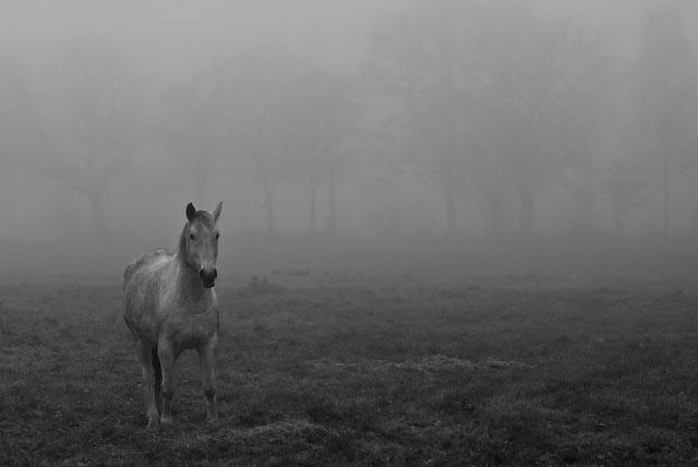 Nebeltag in Ostfriesland 1