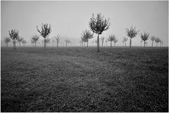 Nebel.Tanz