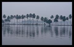 Nebeltanz der Palmen