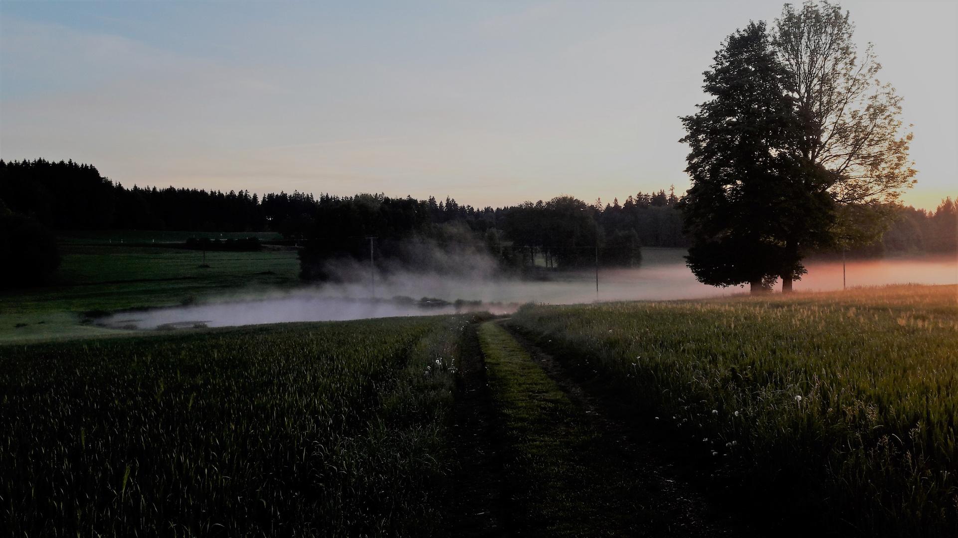 Nebelverfärbung durch Sonnenaufgang
