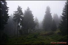 Nebelwald 02