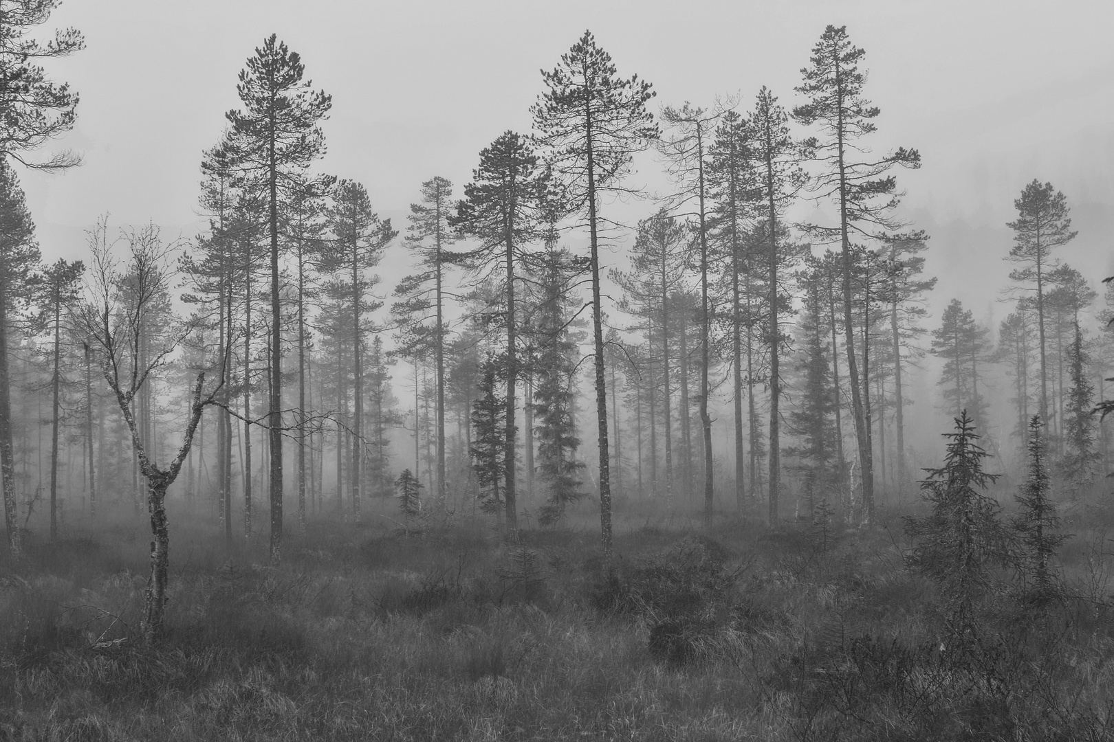 Wetter Tharandter Wald