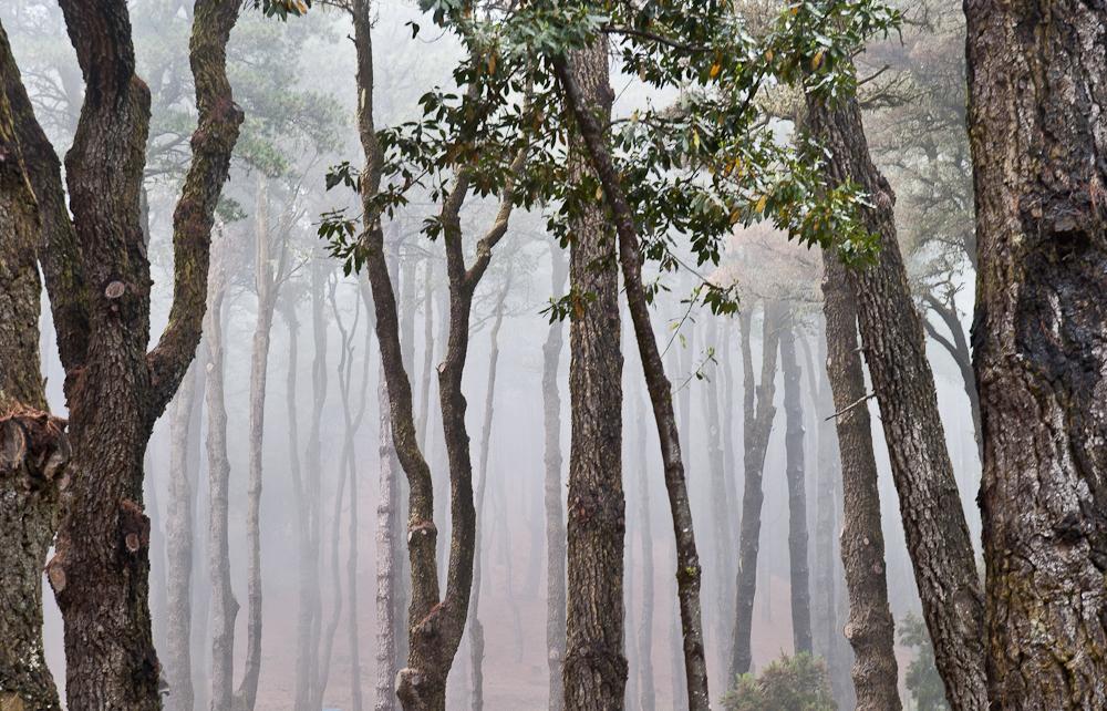Nebelwald auf La Palma