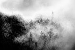Nebelwald boost