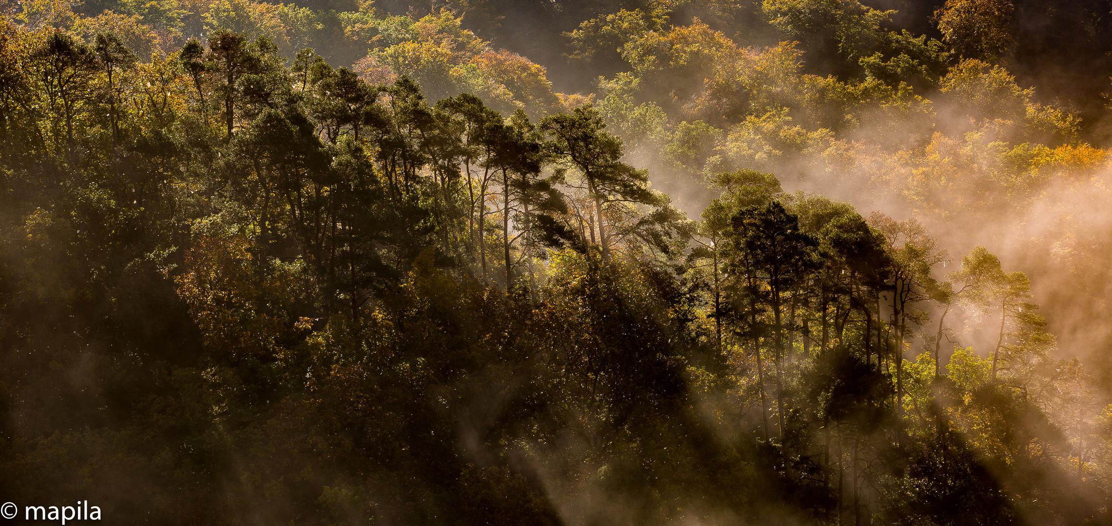 Nebelwald im Rheinland