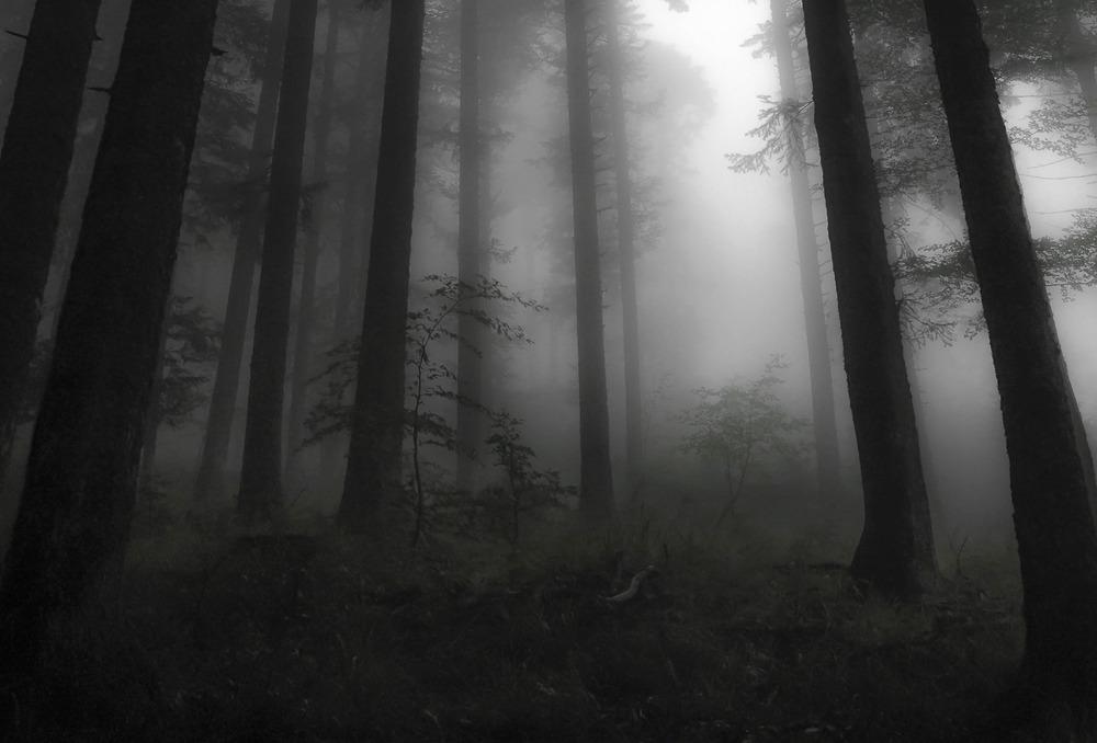 Nebelwald in den Vogesen