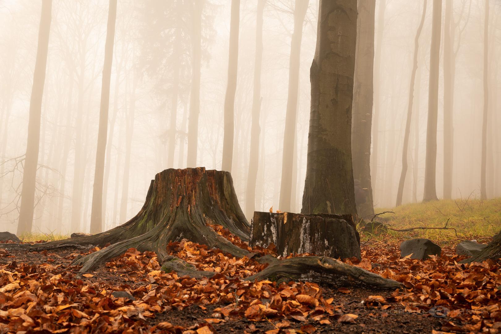 Nebelwald (Liska/ Studeny Vrch- Böhmische Schweiz)