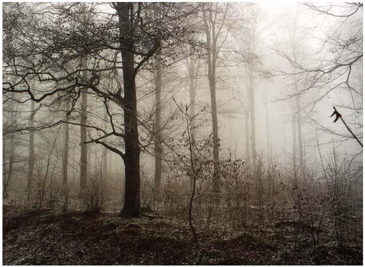 NebelWald-Neu