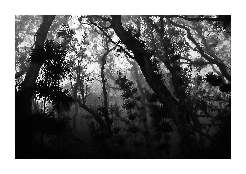 Nebelwald (Silhouetten # 6)