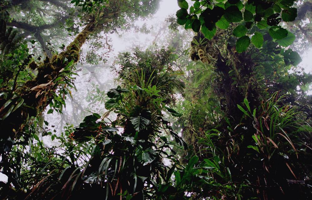Nebelwald St. Elena Costa Rica