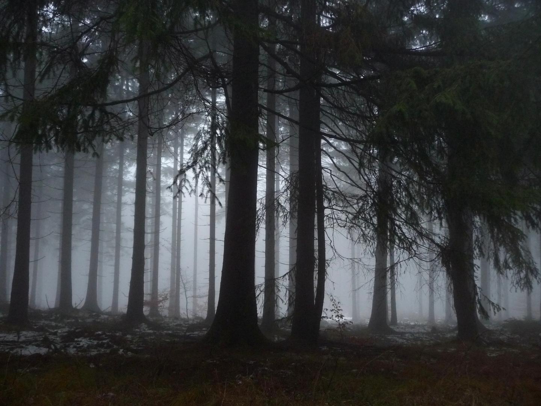 Nebelwald1