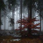 Nebelwald2