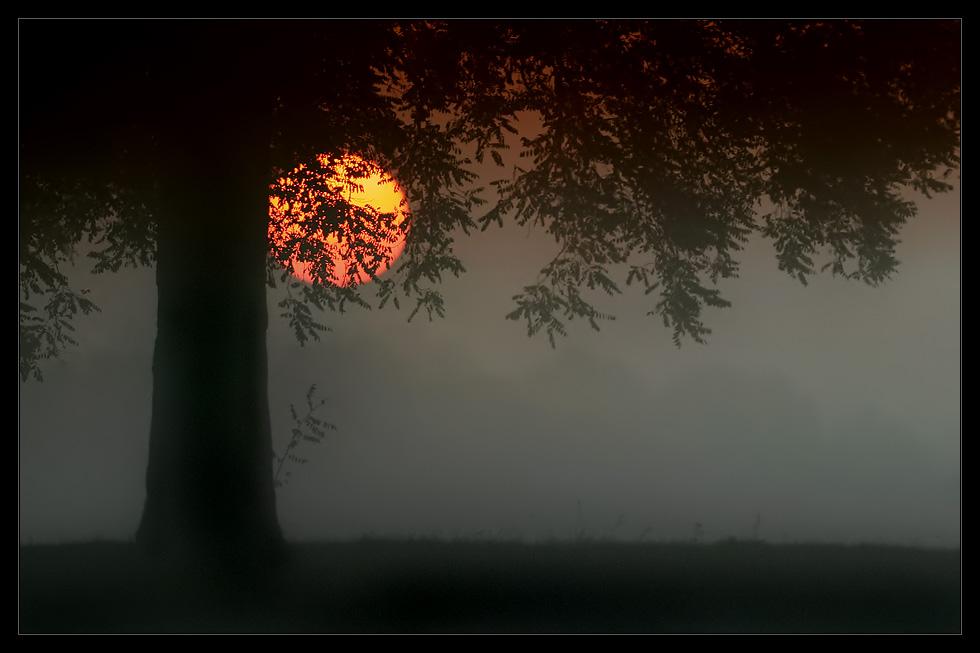 Nebelwelt VI