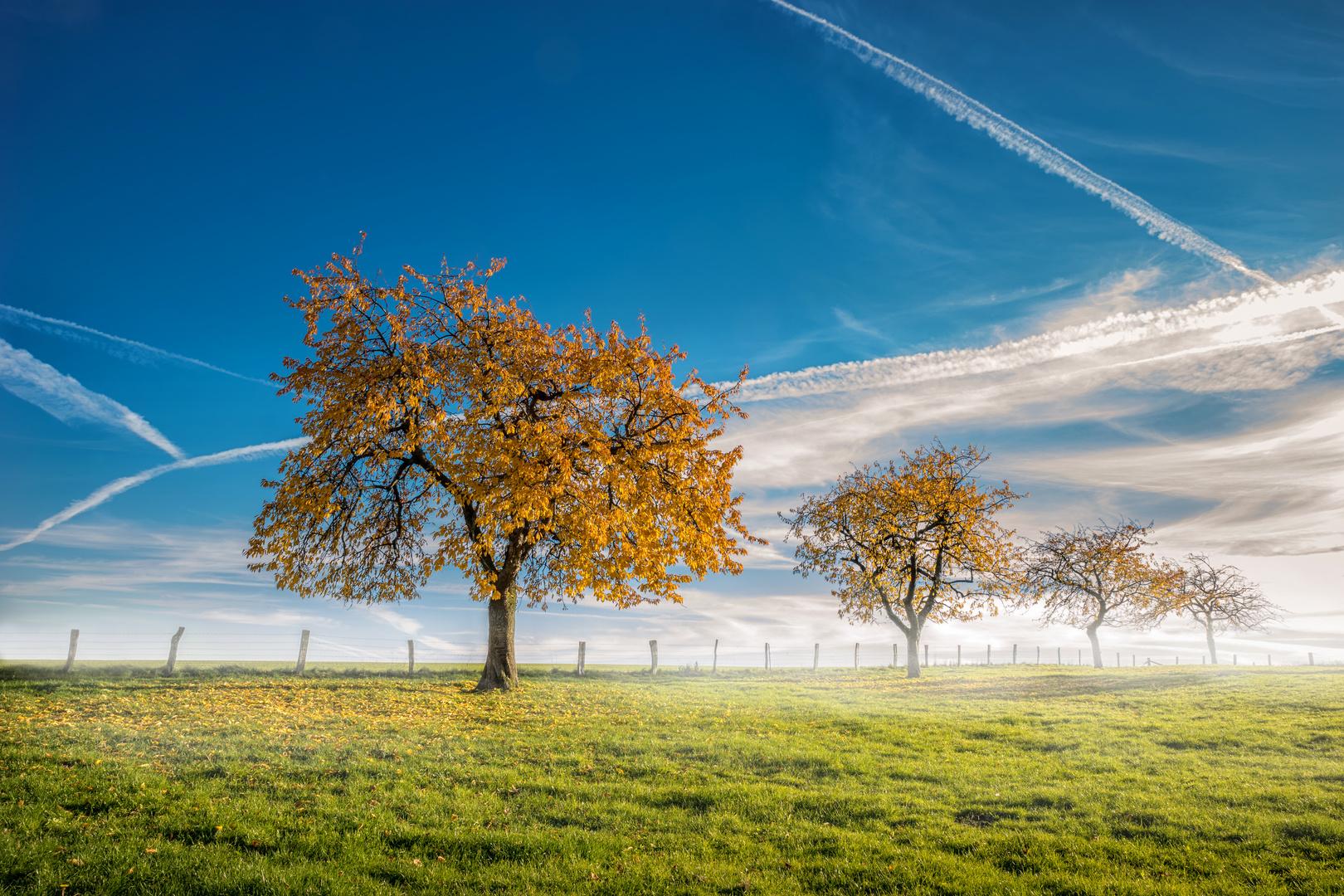 nebliger Herbstmorgen