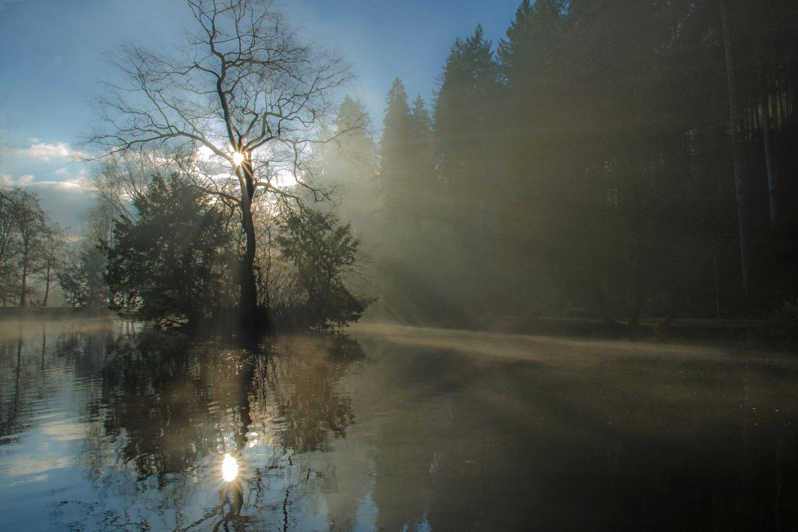 Nebliger Sonnenaufgang am Waldsee
