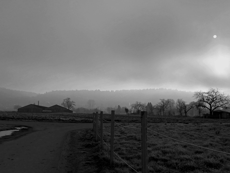 Nebliger Wintermorgen