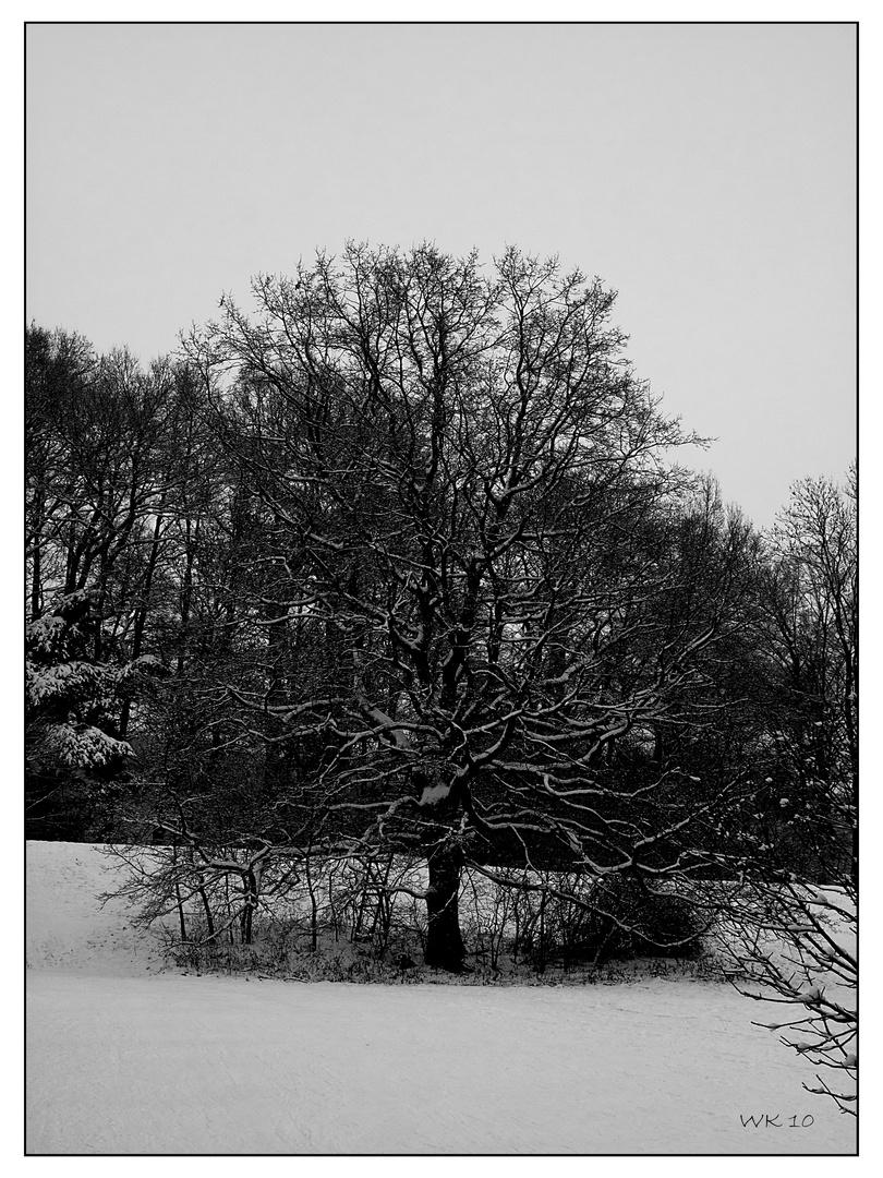 Nebliger Wintertag