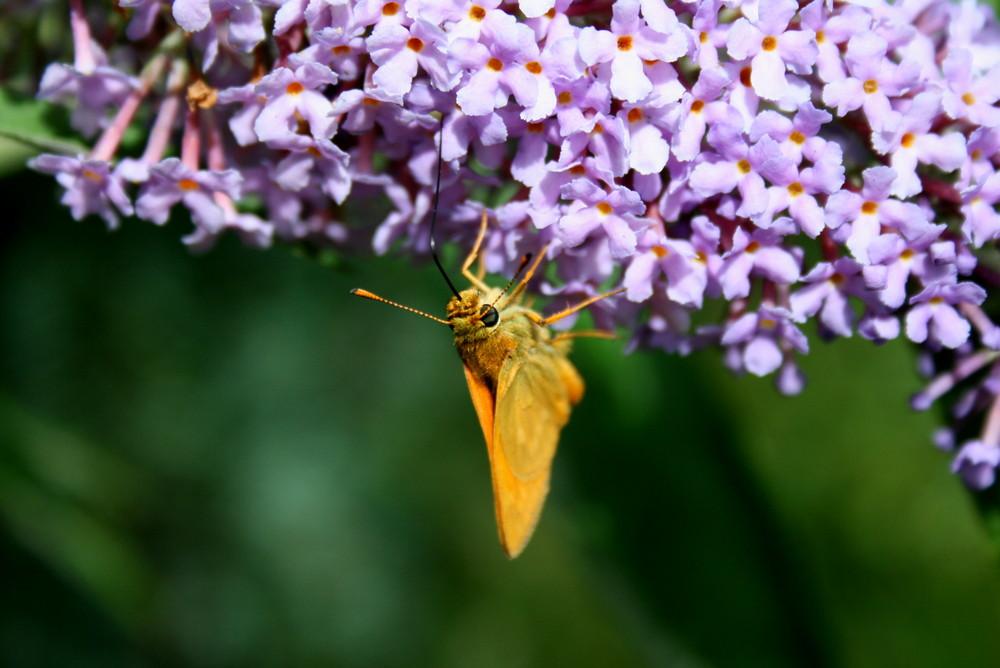 nectar lunch