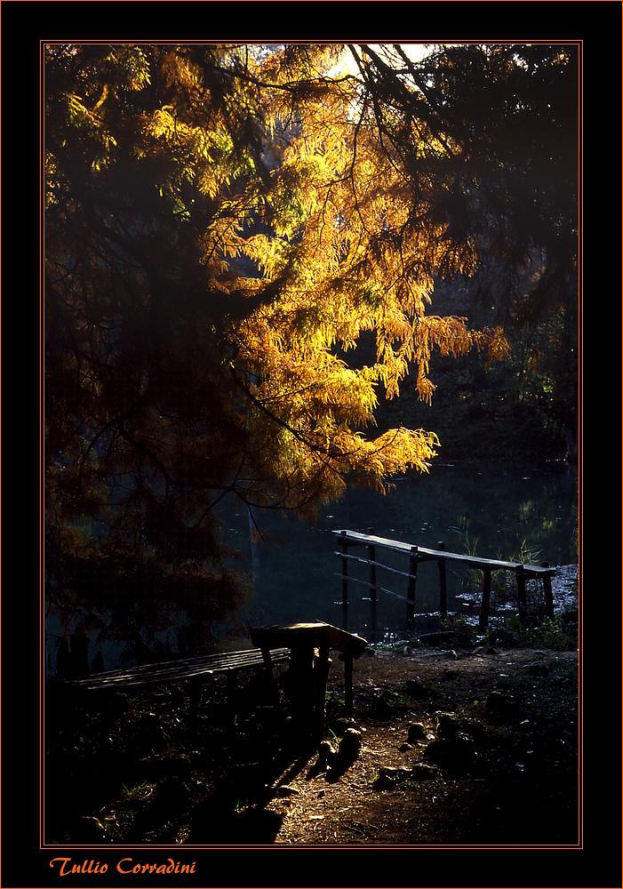 ..nei boschi di Carrega..(Parma)