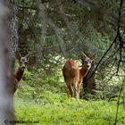 Nei boschi di Trafoi (Bz)