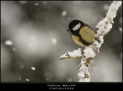 Nei giorni della neve... qualcuno sfida la bufera
