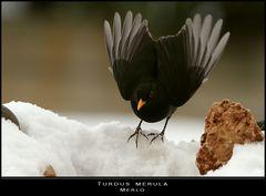 Nei giorni della neve... un angelo nero
