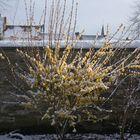 neige tardive