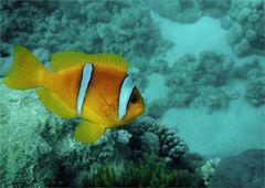 * Nein! Ich bin nicht Nemo! *