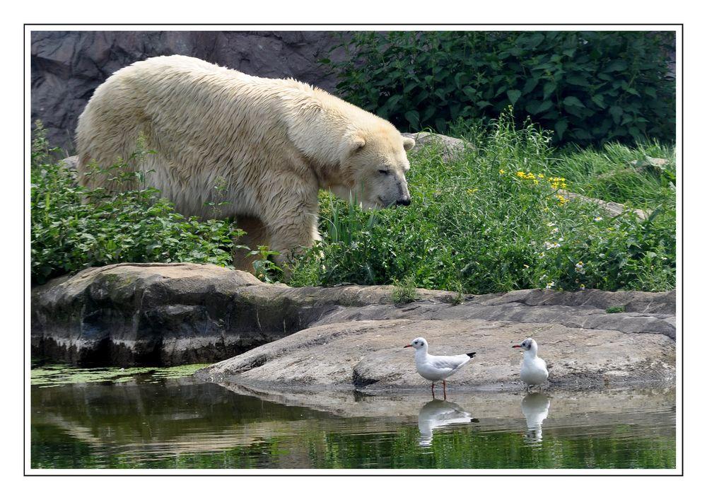 Nein, ich will Dir keinen Bären aufbinden