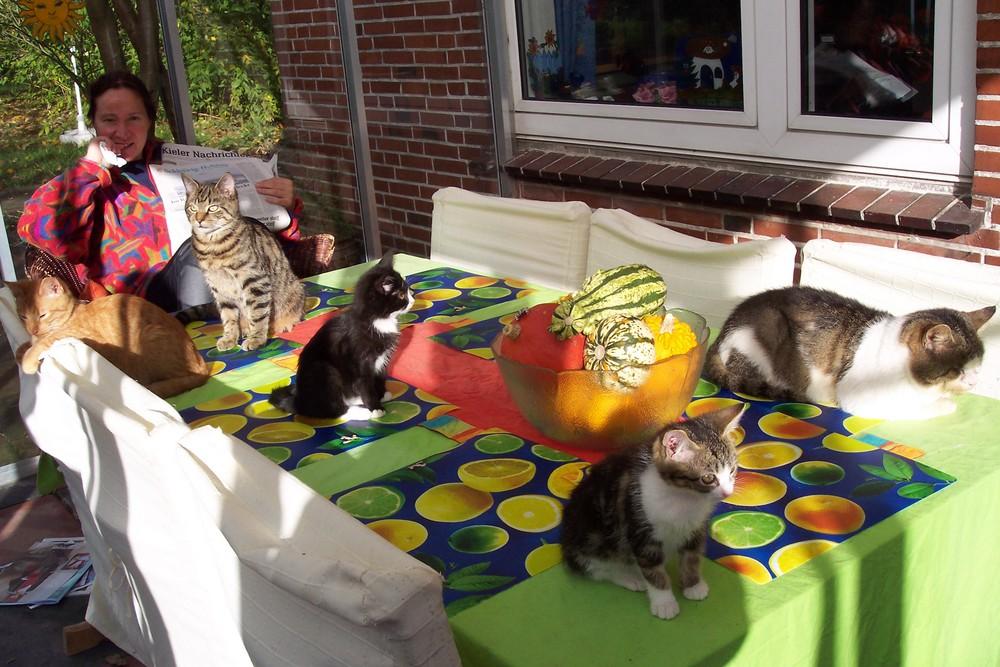 Nein wir haben nicht viele Katzen..... wie kommt ihr denn da drauf ?!