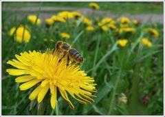 Nektar: Unfertiger Honig