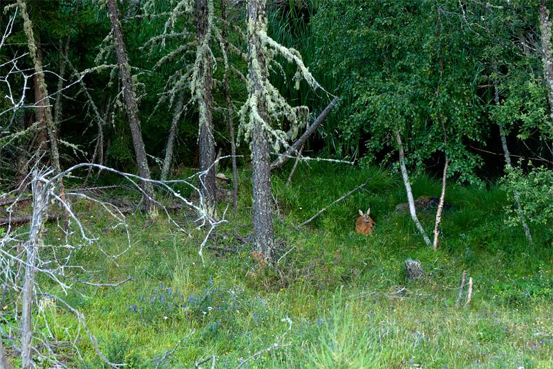 Nel bosco delle fiabe.