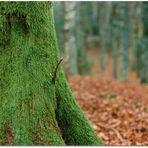 Nel bosco in autunno