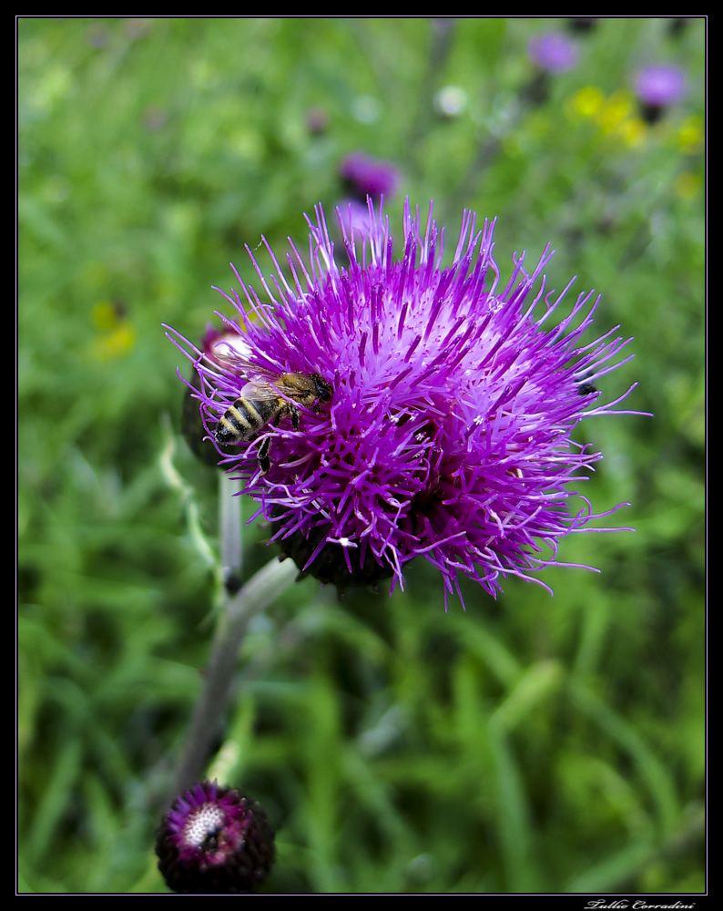 ..nel fiore!..