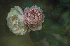 ... nel giardino segreto