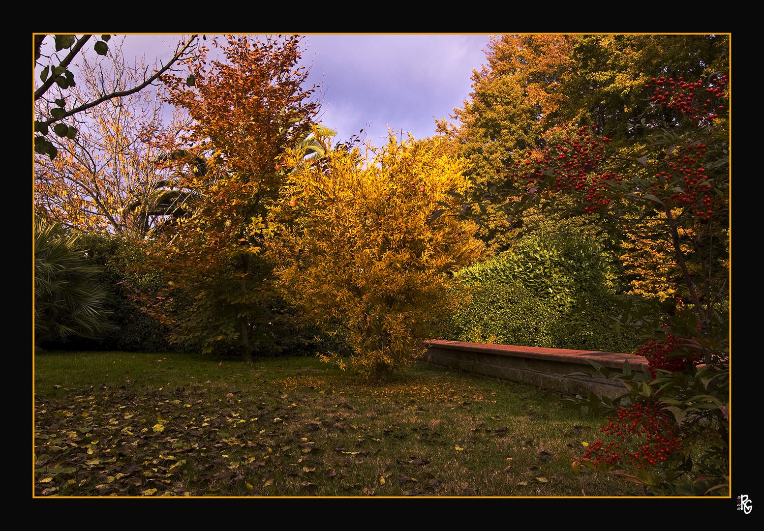 Nel mio giardino e' arrivato l'autunno