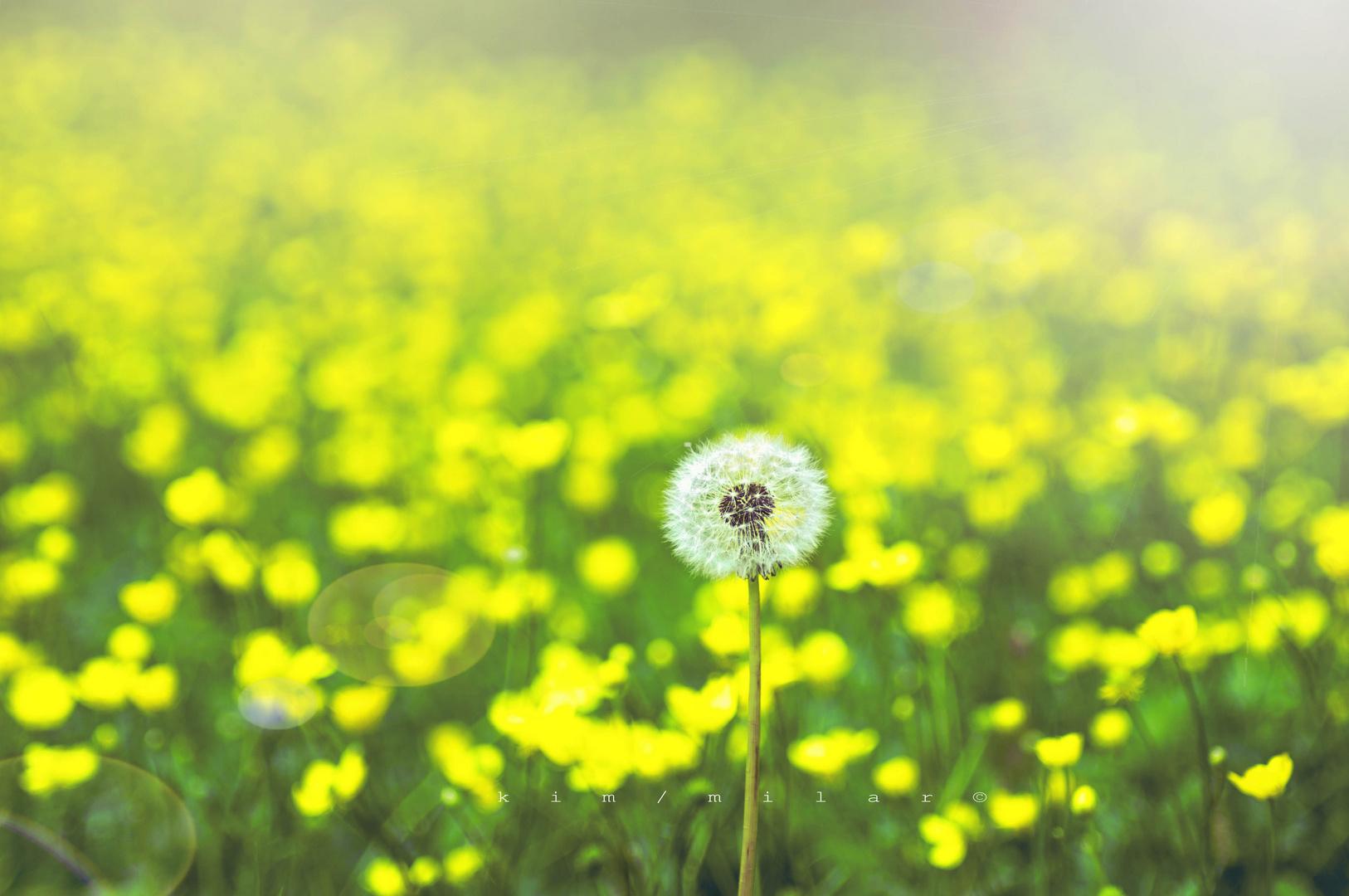 nel mondo di giallo