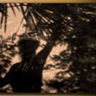 nella giungla