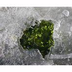 Nella morsa del gelo 1