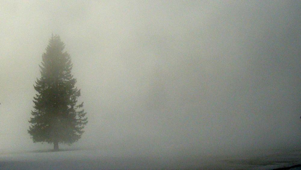 nella nebbia un albero