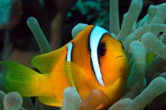 Nemo - einmal ganz nah ...