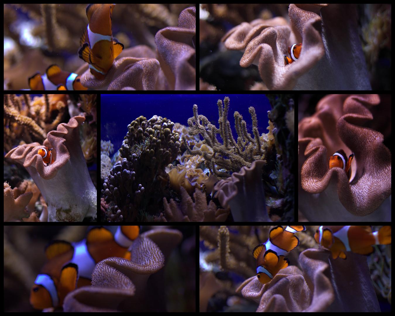Nemo: gesucht und gefunden!