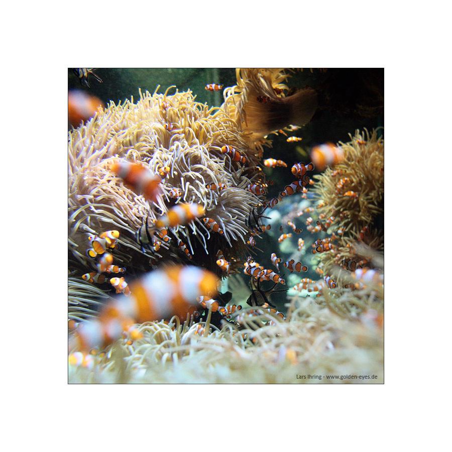 Nemo lässt grüßen - Aquarium in Monaco 2010