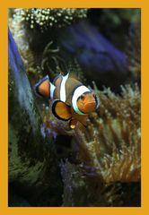 Nemo mal von watfoto.de