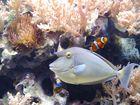 Nemo und seine Freunde