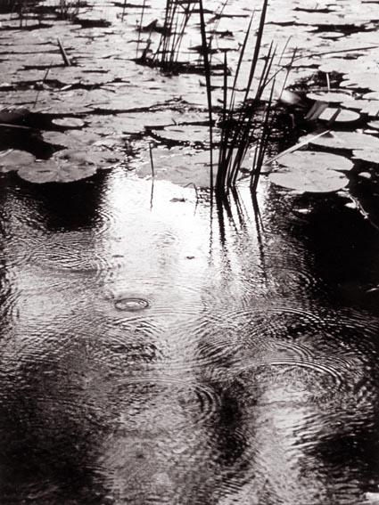 Nenufares en el cañon del rio lobo. La Rioja