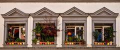 Neoklassizistische Fensterreihe